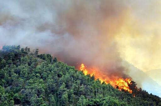 نیاز جنگلهای قرهداغ به نیروی حفاظتی ویژه جنگل