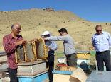 اشتغال 1500 نفر در صنعت زنبورداری مرند/ تولید 450 تن عسل از کندوهای مرند