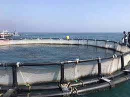 اجرای طرح پرورش ماهی در قفس در سد رازوجرگلان خراسان شمالی