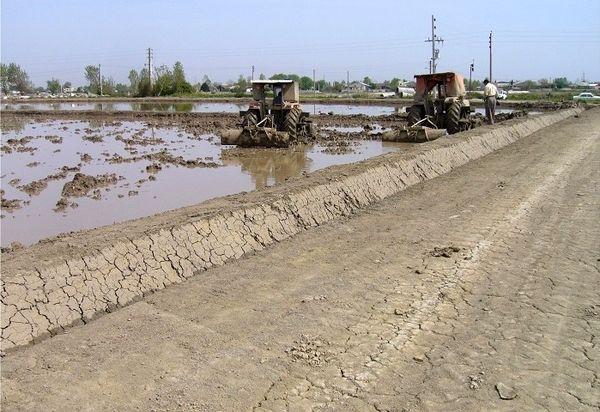 تجهیز و نوسازی 37 هزار هکتار از اراضی شالیزاری استانهای شمالی کشور
