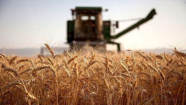 تعاون روستایی ۵۰ درصد گندم کردستان را خریداری می کند