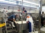خط تولید پنیر پیتزا در چهارمحال و بختیاری راهاندازی شد