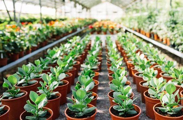 توسعه کشت گلخانهای، در اولویت سیاستهای جهاد کشاورزی اصفهان