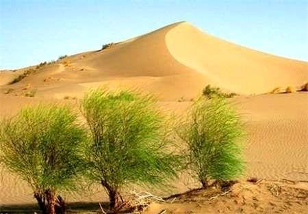 تدوین تاریخ شفاهی مدیریت مناطق بیابانی کشور