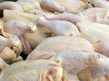 هیچگونه مرغی تحت عنوان مرغ تعاونی، دولتی و آزاد وجود ندارد