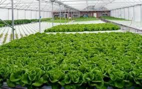 انتقال 5 هزار هکتار کشت سبزی و صیفی از فضای باز به گلخانه ها تا سال 1400