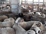 ممنوعیت عرضه دام زنده از آذربایجانغربی تصویب شد