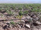 سیل حدود ۲ میلیارد ریال به حوزه کشاورزی شیروان خسارت زد