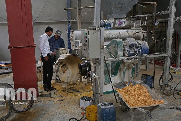 واردات گندم برای خوراک دام 99 درصد کاهش یافت