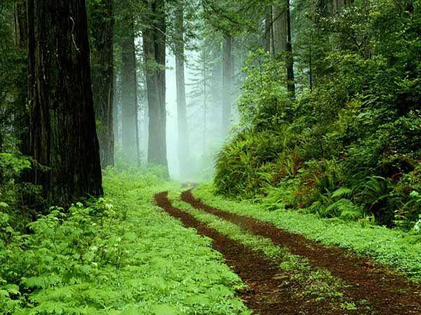 طرح مدیریت پایدار منابع طبیعی منطقه هیرکانی برای صیانت از مراتع و جنگلها