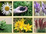 برگزاری دهمین همایش ملی گیاهان دارویی وکشاورزی پایدار در همدان