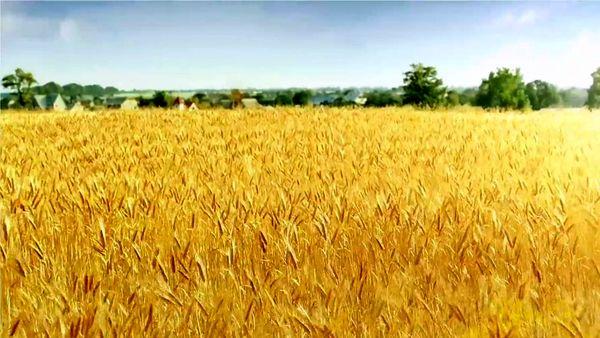 تولید  5.12 تن گندم و  9.3 تن جو آبی در هر هکتار در مزرعه شهرستان ارزوئیه