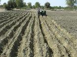 کشت پاییزه در 180 هزار هکتار از زمین های کشاورزی سیستان و بلوچستان آغاز شد