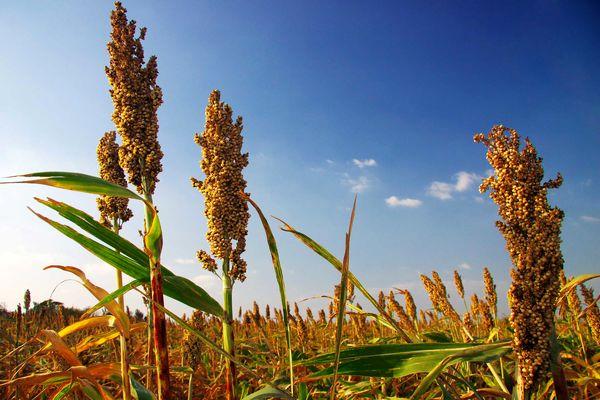 رشد قیمتها در محصولات غذایی و کشاورزی