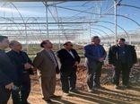 بازدید مجری طرح توسعه گلخانه های کشور از گلخانه های شهرستان شهرضا