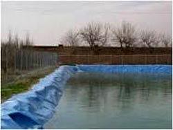 رفسنجان رتبه سوم تولید آبزیان را در استان کرمان دارد