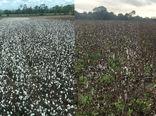 تغییر شیوههای کشاورزی برای مقابله با بلایای طبیعی