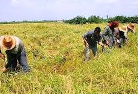 ضرورت افزایش سهم کشاورزی از اعتبارات ملی
