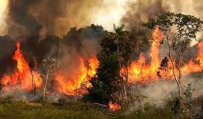 """آتش سوزی در جنگل های """"بلوط بلند""""شهرستان اردل"""