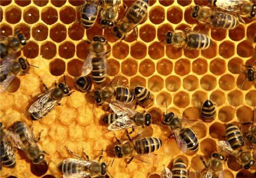 برگزاری کارگاه آموزشی بیماریها و تولید ژل رویال در زنبورستانها