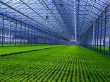 واگذاری 9 هزار هکتاری شهرکهای کشاورزی تا پایان سال جاری