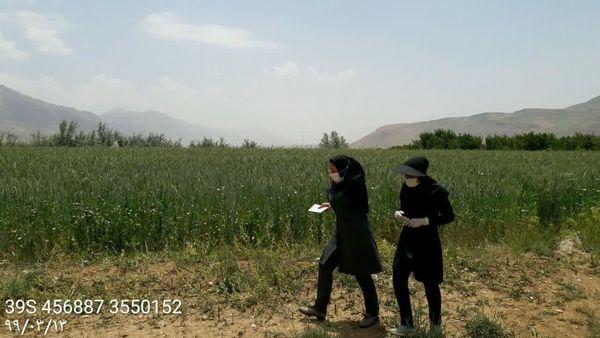 برداشت 5 هزار تن  تریتیکاله قصیل از مزارع شهرستان اردل