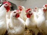 خطونشان آنفولانزای پرندگان برای بازار تخممرغ