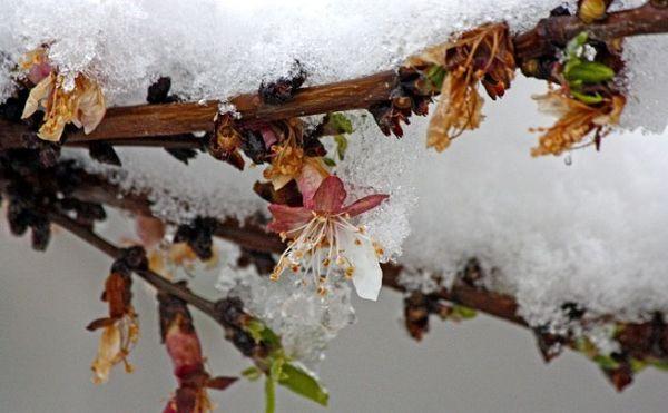 موج دوّم برف و کاهش دمای بهاره از یکشنبه شب (24 فروردین) در استان آذربایجان شرقی
