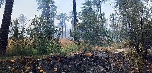 120 اصله درخت طعمه آتش شد