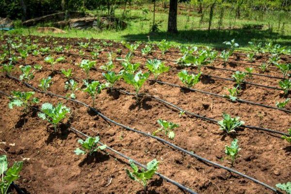 تجهیز ۵۴۰۰ هکتار از اراضی زراعی اشنویه به سیستمهای نوین آبیاری
