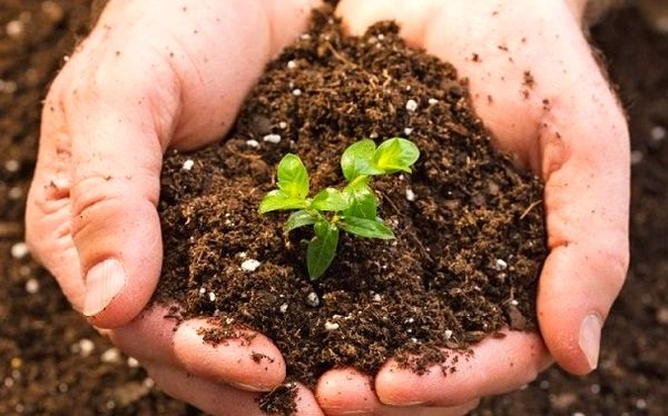 تدوین آیین نامه اجرایی قانون حفاظت از خاک تا ۶ ماه پس از ابلاغ