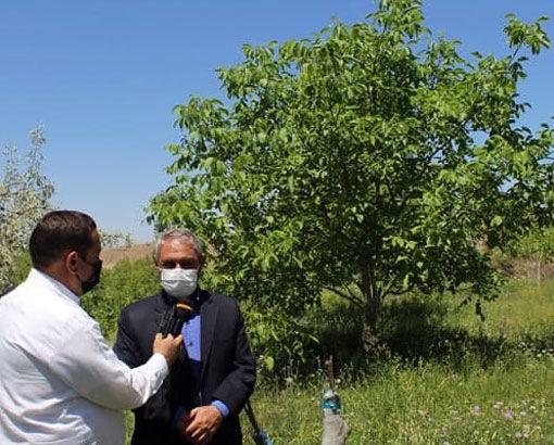 حمایت جهاد کشاورزی در قالب طرح تغییر الگوی کشت در اراضی شیبدار شهرستان مرند