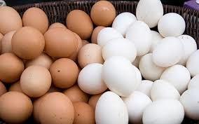 سالانه 20 هزار تن تخم مرغ در استان سمنان تولید میشود