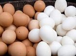 مصرف تخم مرغ از سنین خردسالی ترویج شود