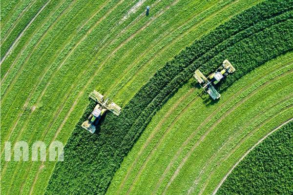مزرعهای در پنجاب پاکستان