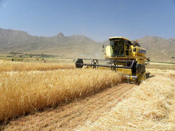 پیشبینی برداشت 13 هزار تن جو از مزارع شهرستان شهرکرد
