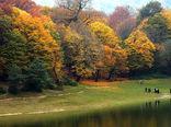 رونمایی پلتفرم فائو برای پایش جنگل
