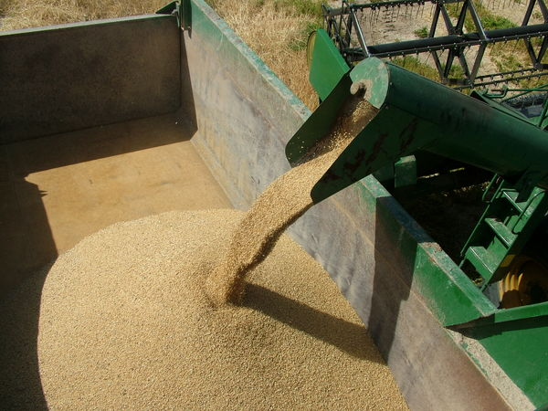 خرید 3500 تن گندم بذری از کشاورزان سیستان و بلوچستان