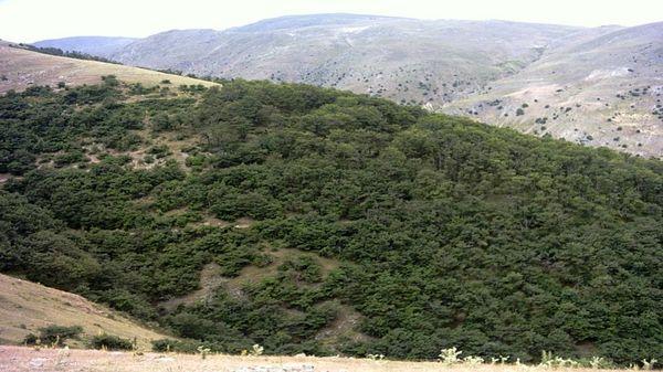 امسال 50 هزار هکتار ذخیره گاه مرتعی در آذربایجان غربی شناسایی میشود
