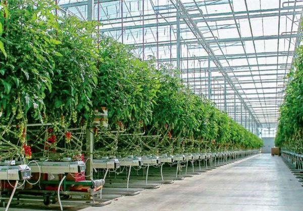 ستاد ویژه رفع موانع توسعه گلخانه ها در استان تهران تشکیل شد
