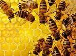 تلاش وزارت جهاد کشاورزی برای تشکیل زنجیره ارزش زنبورعسل