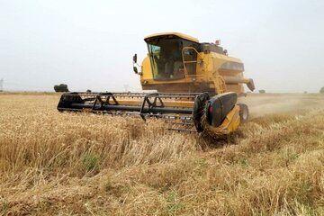 افزایش 50 درصدی کشت گندم در سمیرم