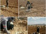 آغاز کشت پیاز بذری در روستای تومانک شهرستان بن